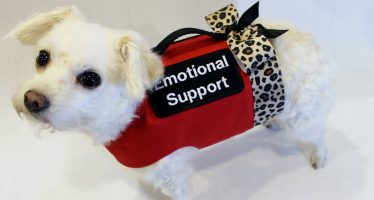 The BS of Emotional Support Animals